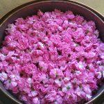 Cuve alambic remplie de roses fraiches